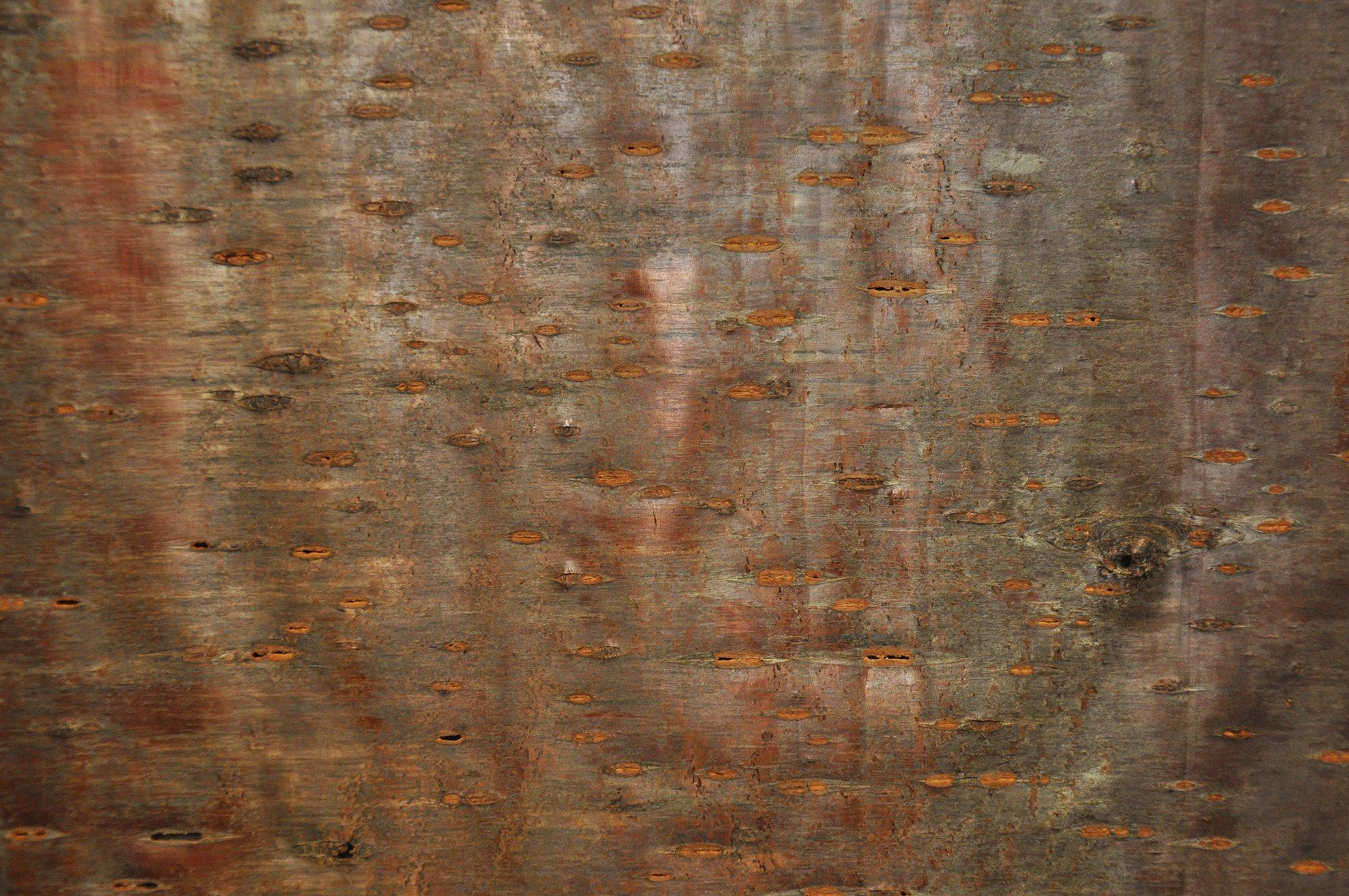 Tree Bark Veneer : Tree bark veneer laminates birch cherry pine house