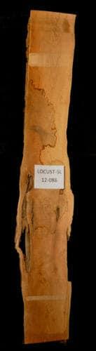 Locust live edge wood slab for sale for desks, tables, designer wall treatments, other. Item #Locust-SL-12-086