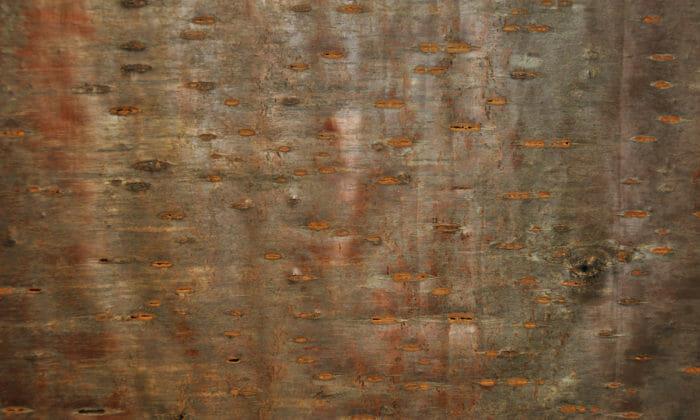 Dark Mood Wallpaper