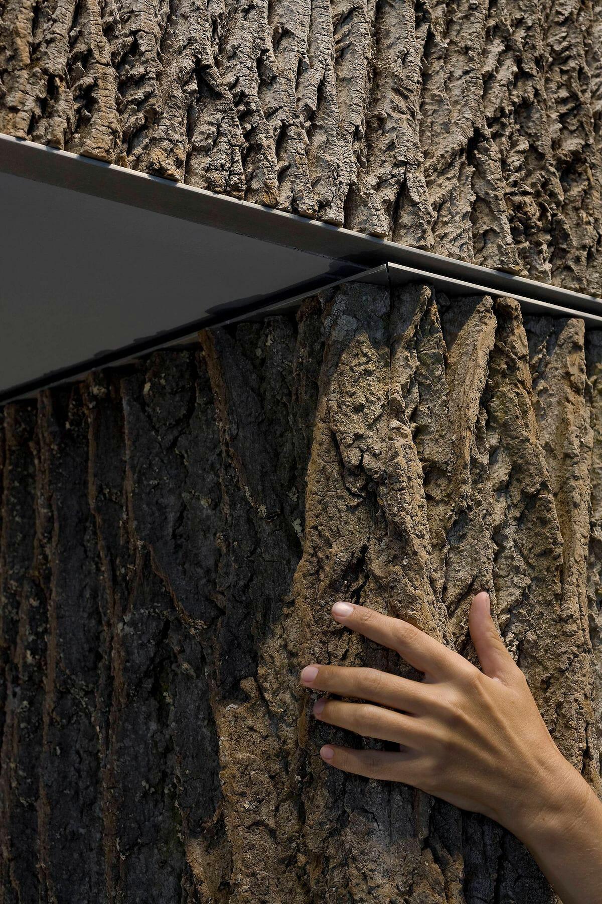 Tree Wall Paneling : Poplar bark wall panels image gallery house