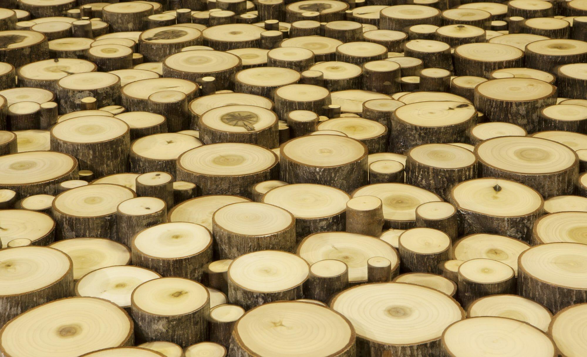 Tree Trunk Wall Art | End Cut Wood Wall | Bark House