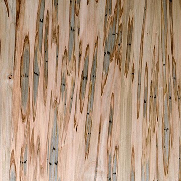 Bark house live edge wood slabs for sale ambrosia sample for Live edge wood slabs new york