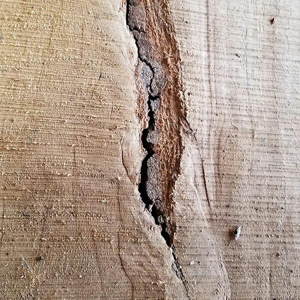 Bark house live edge wood slabs for sale ingrown bark for Live edge wood slabs new york