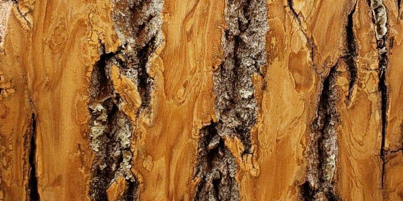 Sample of Bark House Product: Poplar Bark Sanded: clear