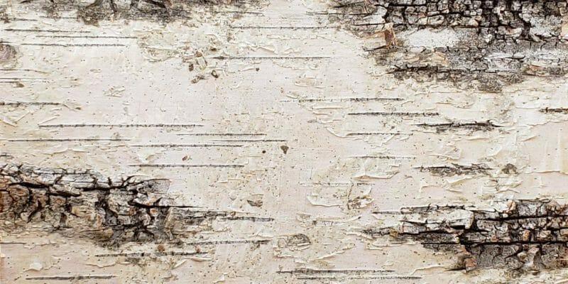 Sample of Bark House Product: White Birch Bark