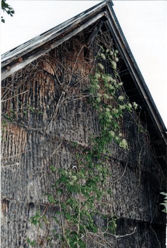 poplar bark siding that was installed in 1931
